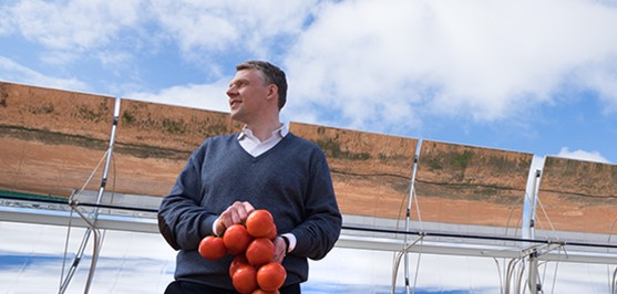 Coles enters 10 year contract for tomatoes powered by sun and seawater